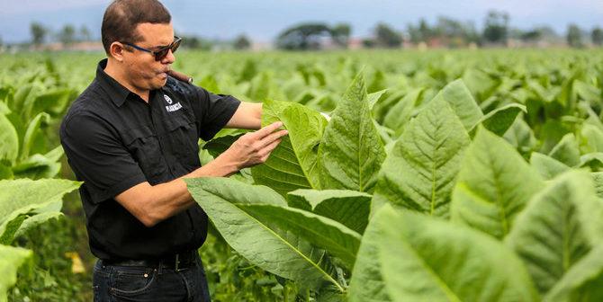 Nicaragua Puffing Up Status in Rarefied World of Premium Cigars