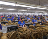 Covid-19: Cigar Factories React to Viral Outbreak